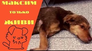 Погрызенный щенок в грязной луже волочит лапку История Максима