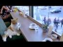 VIDEO-2019-09-03-12-52-31.mp4