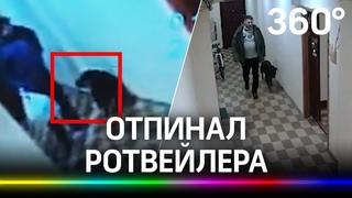 Отпинал собаку под камерой: ротвейлер шёл на прогулку