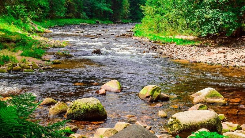 Sounds of Nature Noise River and Forest Birds singing 2 hours Звуки природы шум реки и пение лесных птиц 2 часа