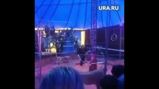 Львица напала в цирке во время представления