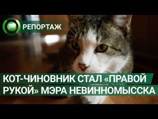 Кот-чиновник более 10 лет служит в администрации Невинномысска. ФАН-ТВ