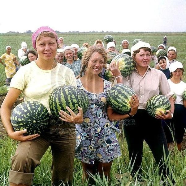 Астраханская область, 70-е годы... А вы ездили на уборку урожая