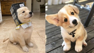 The Cutest Puppies In The World | Cute Puppies Doing Funny Things 2021| Aww Cute Baby Animals