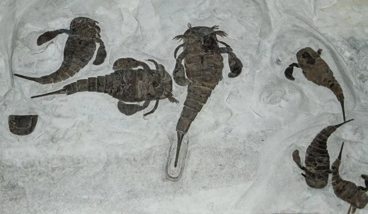 Ракоскорпион: 100 миллионов лет кровавой тирании самого успешного хищника в истории Земли