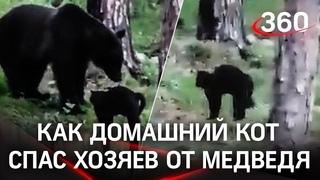 «Вася, успокойся!»: хозяева сняли, как кот прогнал медведя в тайге. Полная версия противостояния