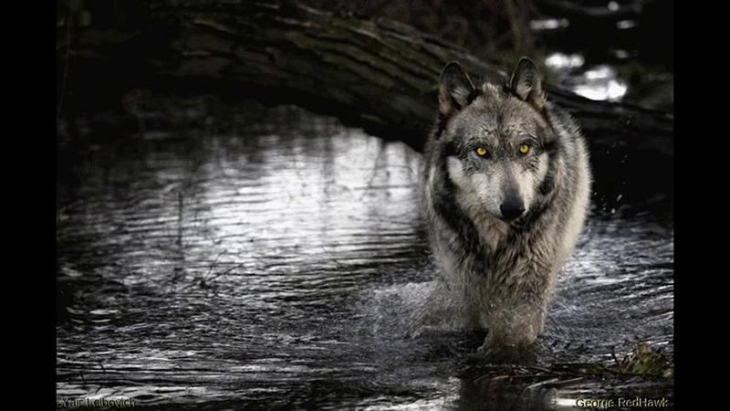 Шурик Лыков - Одинокий Волк