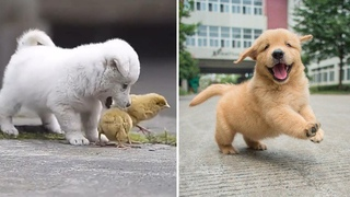 Cutest Puppies Doing Funny Things 2021 | Aww Animals So Cute Cute Baby Animals Videos Compilation