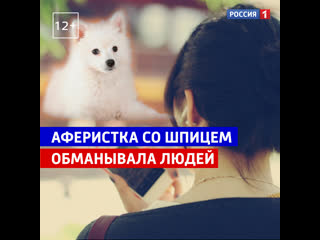Аферистка со шпицем обманула десятки людей — Россия 1