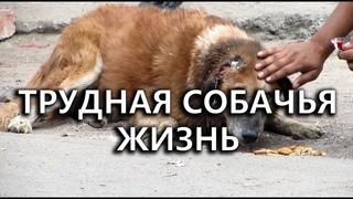 Жуткая история одного заводского пса Тузика трудная собачья жизнь