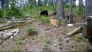 Спасение Медвежат Охота и Рыбалка с Юмором Приколы на охоте и рыбалке
