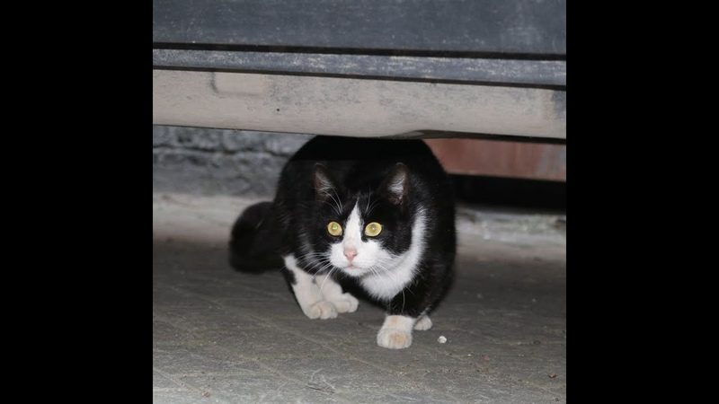 СОС Ласковая Кошка Ласточка Феликса ищет дом Живет на улице Стерилизована Спб