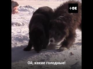 Рома и Саша - блогеры,спасают животных.