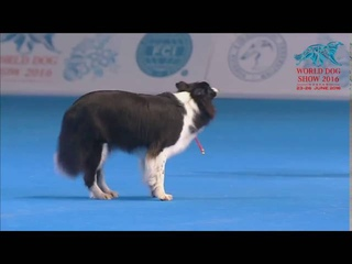FCI Dog dance World Championship 2016 – Winner freestyle - Yvonne Belin and Alice (Switzerland)