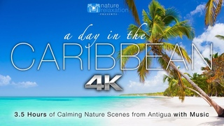 A Day in the Caribbean 4K 3.5 HR Nature Relaxation™ Ambient Film + Calming Music