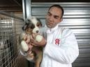 Une centaine de chiens sauvés par 30 Millions d Amis dans un élevage près d Angoulême