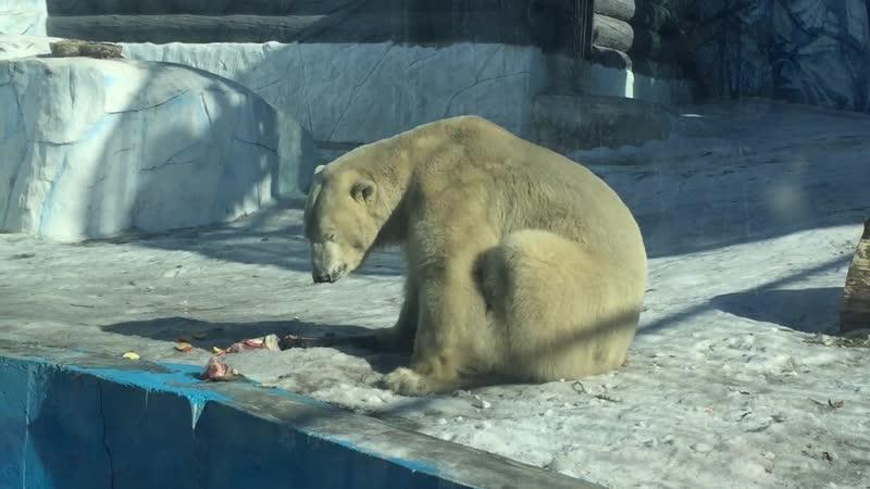 Арктику сбережем белых медведей спасём традиц занятие для детей с ОВЗ в Межд день полярного медведя
