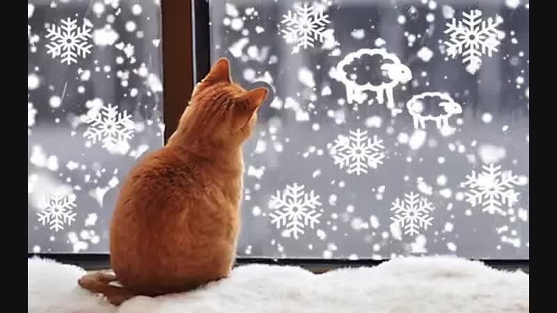 Зима кругом белым бело а я сижу на теплом окне и наблюдаю как падает снег ❄ ❄ ❄ 🐈 👍