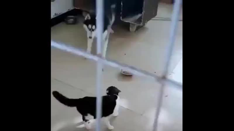 Кто в доме хозяин Кот воспитывает собаку