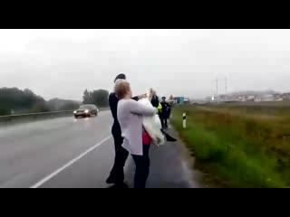 В Калининградской области сотрудница ГИБДД спасла лебедя, бегавшего по трассе