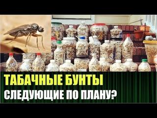 Крупнейшие производители сигарет в России предупредили, что могут остановить работу