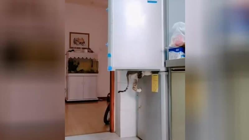 Налет на холодильник