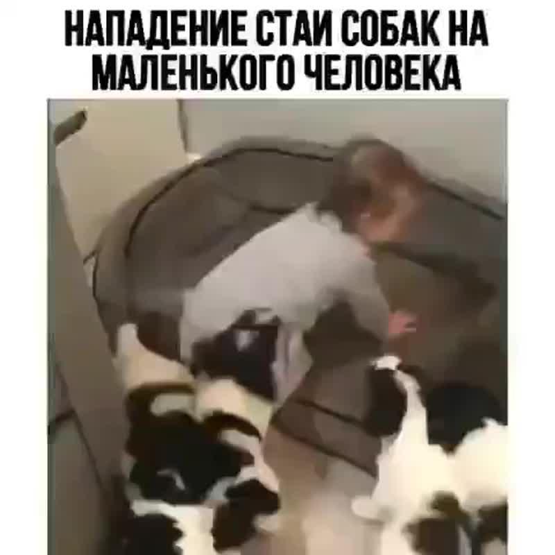 Стая собак напала на ребёнка 2.0 ШОК