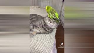 смешные животные \ котэ ржач   #щенок #коте #смех #ржач #юмор #приколы2021