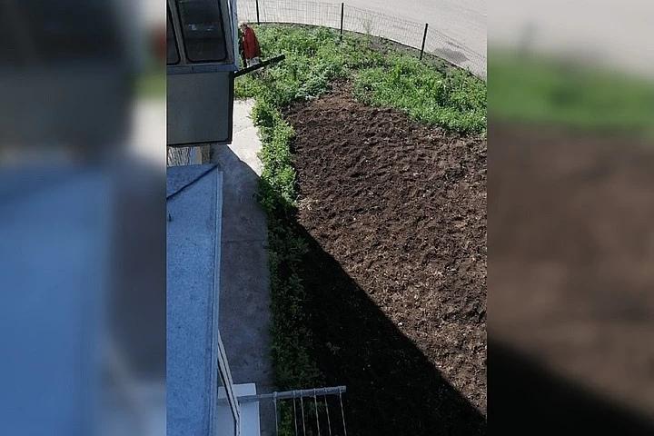 В Бердске старшая по дому устроила во дворе пятиэтажки огород