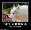 Фотоальбом Ольги Ногиной