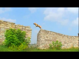 Собака-паркурщик в Каменец-Подольской крепости