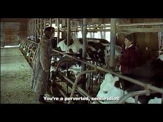 Одинокая корова плачет