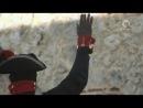 Туссен Лувертюр гаитянская революция