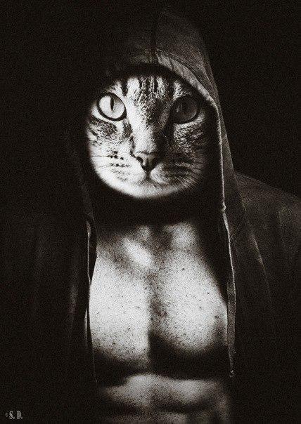 картинки людей с головой кота грозном существует огромное