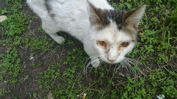 выходе картинки избитых кошек нужно