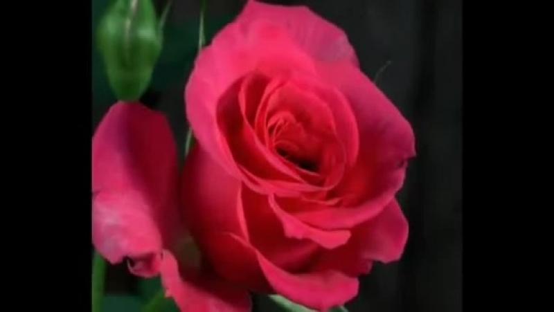 Як гарно розпускаються квіти Це для тебе