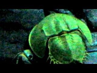 Трилобиты, рыбы и крабы (шанхайский океанариум, 2010)