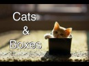 Funny Videos 2014 - compilation of Cats and Boxes