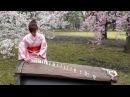 さくら Sakura  25絃箏 25 strings koto