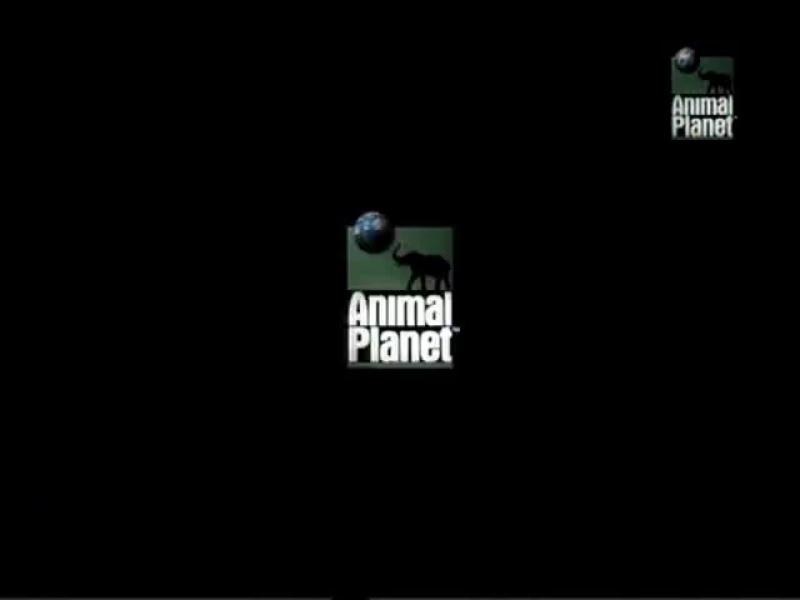 Дневник большой кошки |  Big Cat Diary. (сезон 1, серия 3)  (1996)
