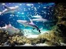 МОСКВАРИУМ НА ВДНХ - обзор всех рыб ( Moscow Oceanarium )