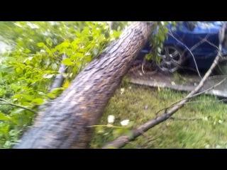 Дерево упало на машину в ново-ленино. Иркутск