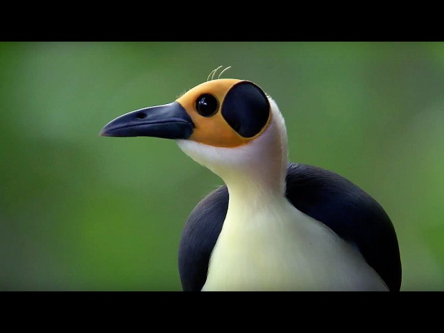 The Birds That Have Lived for 44 Million Years   Africa   BBC