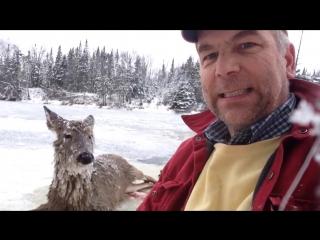 ✔ ОСОБОЕ МНЕНИЕ:  Глухой американец спас провалившуюся под лед олениху