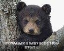 Фотоальбом Виталия Вокалова