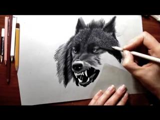 Pencil Drawing- Black Wolf Speed Draw - Jasmina Susak How to Draw a wolf