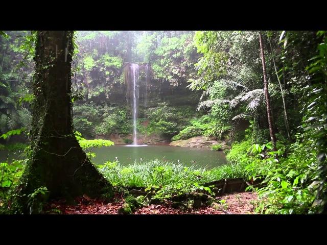 Sonido de Lluvia y los Animales del Bosque HD Lluvia Relajarse Dormir