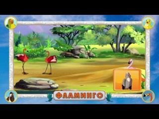 Мультипедия птиц. Глава 1