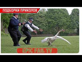 Подборка приколов за Февраль 2016 (+18) #31 A selection of jokes for February 2016