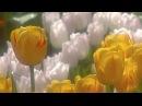 Весна и Оркестр Поля Мориа, Сон- трава - Paul Mauria